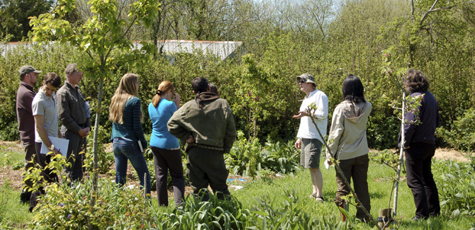 Ourganics forest garden